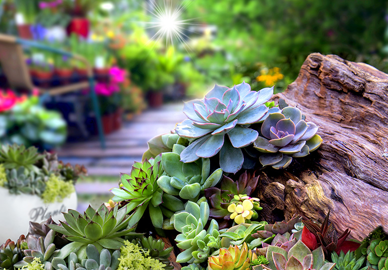 Backyard planting succulents